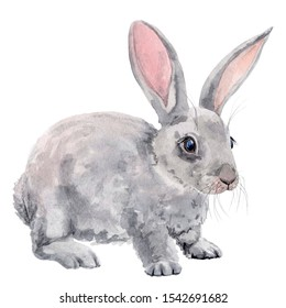 Easter bunnies . Children's watercolor illustration
