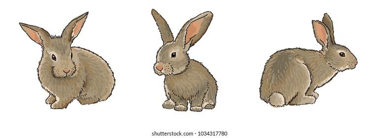realistic bunny images stock photos vectors shutterstock
