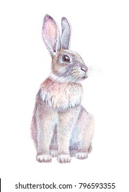 Easter bunny. Watercolor hare isolated on white background. Hand drawn forest rabbit.