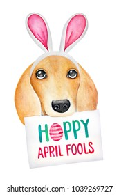 "Easter combining with April Fool's Day illustration. Cute puppy dressed in bunny headband with phrase on paper: ""Hoppy April Fools"". Hand drawn water color drawing on white backdrop, isolated."