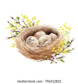 Easter spring watercolor illustration of bird's nest with eggs, willow branches and flowers of the Mimosa, invitation card