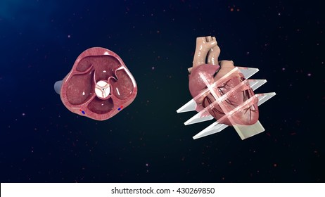 Echocardiogram 3d illustration