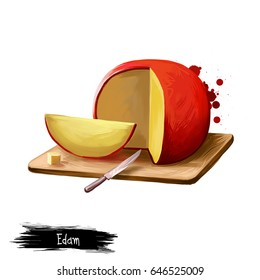 Edam cheese on wooden board digital art illustration isolated on white background. Fresh dairy product, healthy organic food in realistic design. Delicious appetizer, gourmet snack italian meal