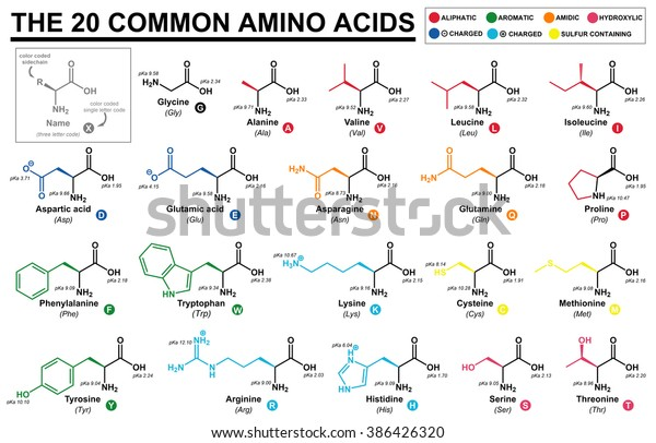 educational chart with all the common amino acids represented with color  coded side chains