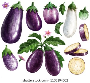 Eggplant watercolor illustration, isolated on white with working path