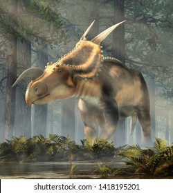 An Einiosaurus in a deep forest among ferns. Einiosaurus was a ceratopsian dinosaur, like the triceratops, from the Cretaceous period. 3D Rendering