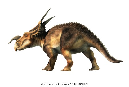 An Einiosaurus on a white background. Einiosaurus was a ceratopsian dinosaur, like the triceratops, from the Cretaceous period. 3D Rendering