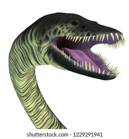 Elasmosaurus Reptile Head 3D illustration - Elasmosaurus was a marine reptile plesiosaur that lived in the seas of North America during the Cretaceous Period.