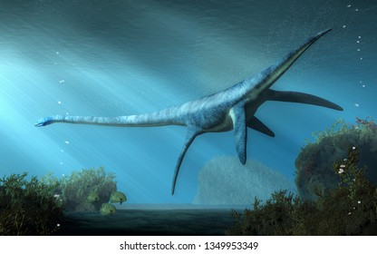An elasmosaurus swims away from you in shallow seas.  This long necked plesiosaur was an aquatic reptile that lived in the ocean during the Cretaceous period. 3D Rendering