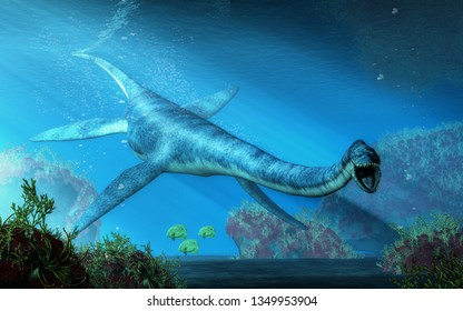 An elasmosaurus swims towards you in shallow seas.  This long necked plesiosaur was an aquatic reptile that lived in the ocean during the Cretaceous period. 3D Rendering