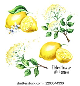 Elder flower and lemon set. Iingredients for making elderflower cocktail. Watercolor hand drawn illustration, isolated on white background
