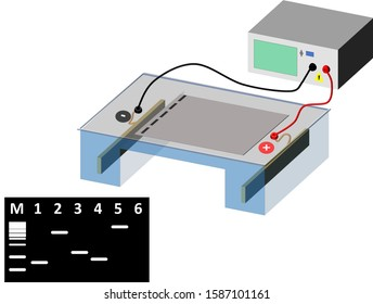 Electrophoresis is a general term that describes the migration and separation of charged particles (ions) under the influence of an electric field