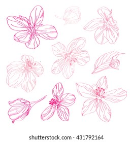 Elegant decorative pink cherry blossom flowers, design elements. Floral decorations for vintage wedding invitations, greeting cards, banners, floral backgrounds