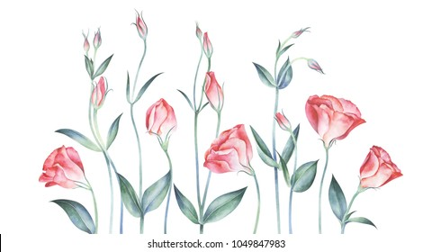 Elegant floral background with pink eustoma flowers. Watercolor hand drawn illustration.