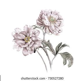 Elegant flowers, the leaves and flowers art design