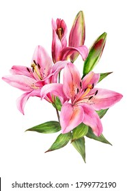 Elegant lily bouquet, pink lilies on an isolated white background, watercolor stock illustration.Greeting card, post card, decor.