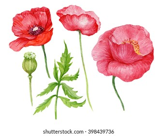 elements of the flower.red poppies watercolor illustration