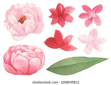 Elements of flowers, leaves and branches traditional drawing and painting by watercolor on white background