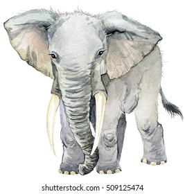 elephant. african animals. watercolor animal illustration