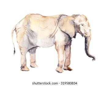 Elephant animal. Watercolor