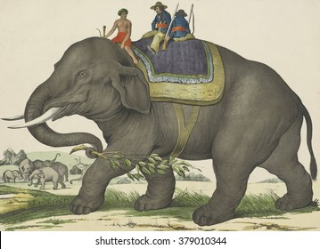 Elephant, by Jos. Scholz, 1829-80, Dutch print, lithograph on paper. An elephant with three men on his back. A group of elephants and two ostriches are in the background.
