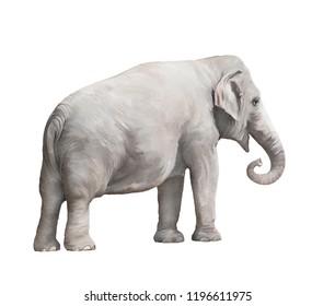 Elephant female watercolor isolated on white background