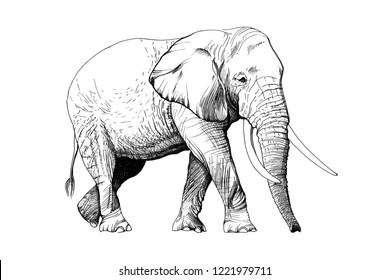 Elephant hand drawn illustrations (originals, no tracing)