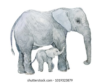 The elephant and a little baby elephant .Watercolor illustration