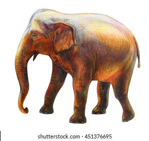 Elephant moving drawing (Elephas maximus)