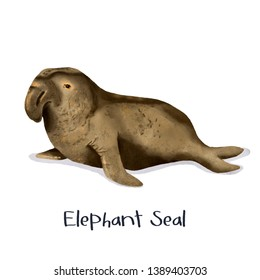 Elephant Seal animal realistic illustration