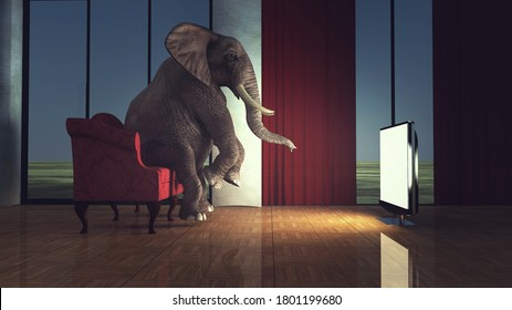 Elephant sits on sofa and watch tv in the living room. Online movie stream concept . This is a 3d render illustration .