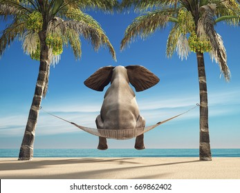 An elephant sitting in a hammock on the beach and look at sea. This is a 3d render illustration