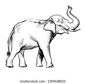 Elephant sketch drawing