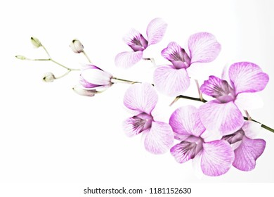 Embossed orchid on background white