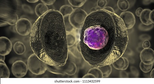 Embryonic stem cells , Cellular therapy , Regeneration , Disease treatment - 3d illustration