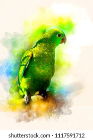 Emerald Green parrot and softly blurred watercolor background.