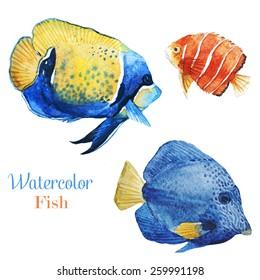 Emperor angelfish,fish, watercolor, tropical fish