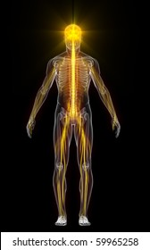 Energy in the human body