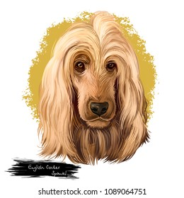 English Cocker Spaniel, Cocker, Cocker Spanie dog digital art illustration isolated on white background. England origin gun dog. Cute pet hand drawn portrait. Graphic clip art design for web, print