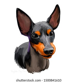 English Toy Terrier, Black and tan dog digital art illustration isolated on white background. England origin toy dog. Cute pet hand drawn portrait. Graphic clip art design for web, print, artwork