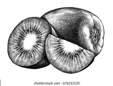 Engrave isolated kiwi hand drawn graphic illustration