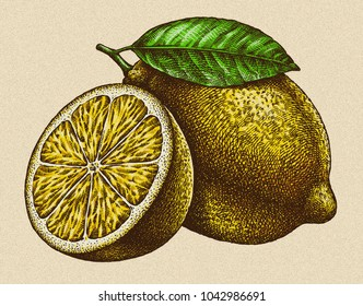 Engrave isolated lemon hand drawn graphic illustration