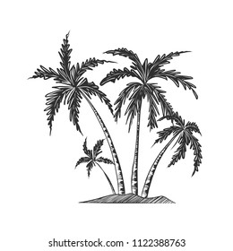 Engraved style illustration for posters, decoration and print. Hand drawn sketch of palm trees in monochrome isolated on white background. Detailed vintage woodcut style drawing.