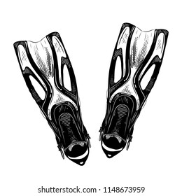 Engraved style illustration for posters, decoration and print. Hand drawn sketch of flippers in black isolated on white background. Detailed vintage etching style drawing.