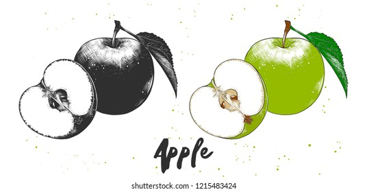 Engraved style illustration for posters, decoration and print. Hand drawn sketch of apple in monochrome and colorful. Detailed vegetarian food drawing.