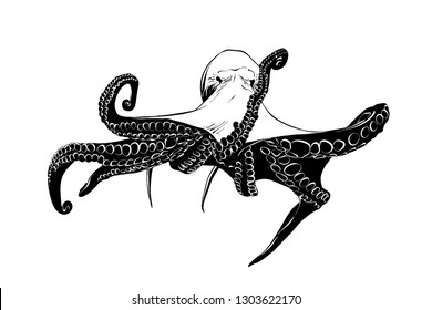 Engraved style illustration for posters, decoration and print. Hand drawn sketch of octopus in black isolated on white background. Detailed vintage etching style drawing.