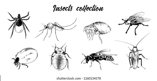 Engraved style illustrations for posters, logo, emblem and badge. Hand drawn sketch set of insects, fly, sucker, mosquito, bug, wasp, mite, cockroach. Detailed vintage etching drawing.