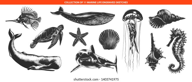 Engraved style sea life animals collection for posters, decoration and print, logo. Hand drawn sketches of in monochrome isolated on white background. Detailed vintage woodcut style drawing.