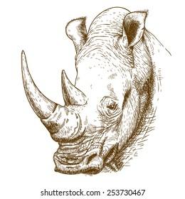 Rhino Sketch Images, Stock Photos & Vectors | Shutterstock