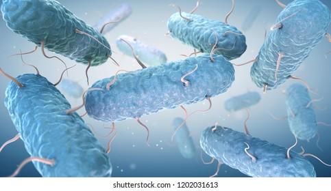Enterobacteria. Enterobacteriaceae are a large family of Gram-negative bacteria. 3D illustration